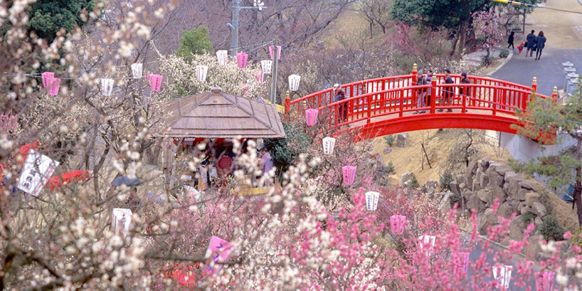 冠山総合公園 梅の里(冠梅園)