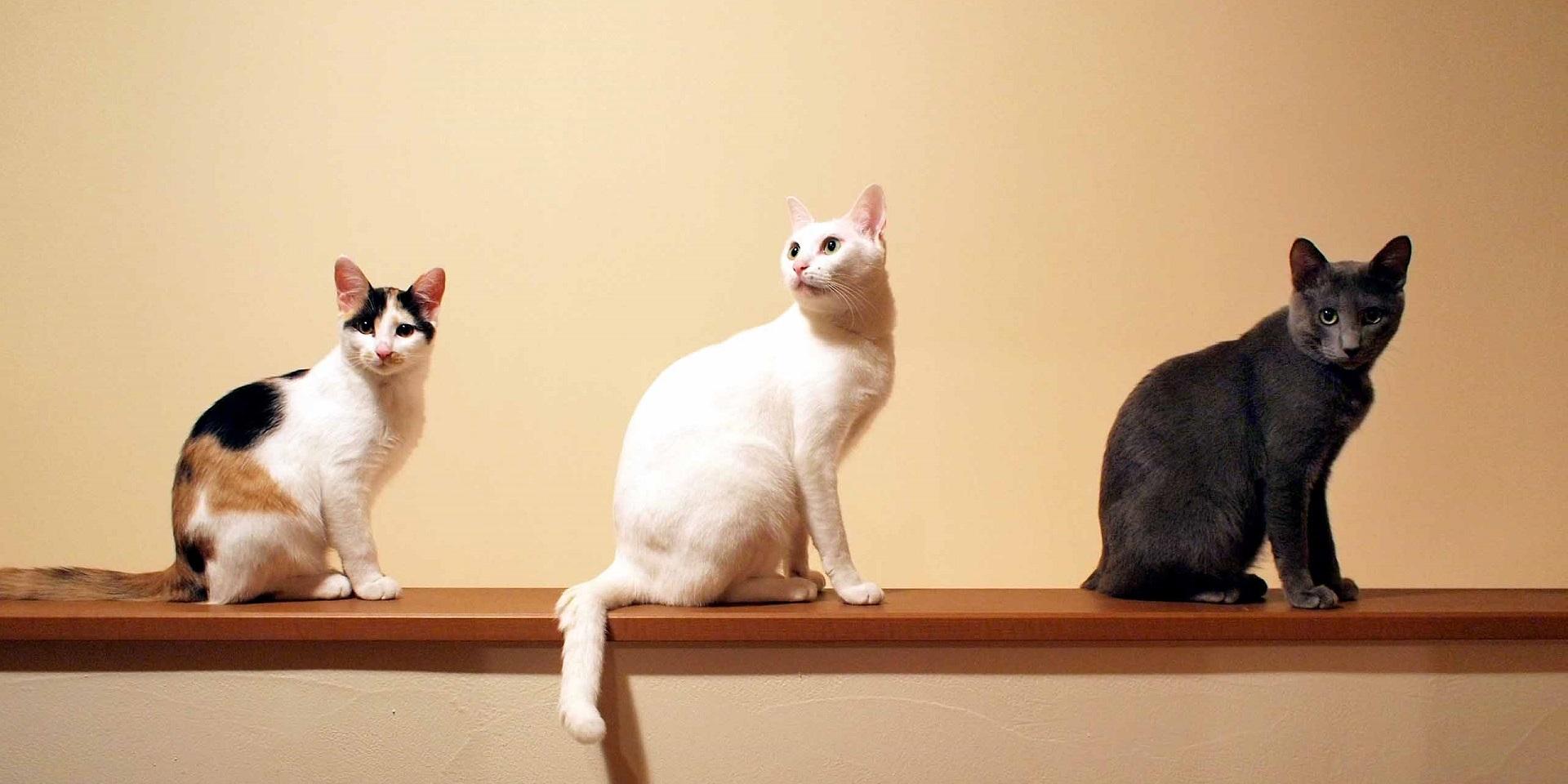 山の上の小さな猫カフェ 山猫軒