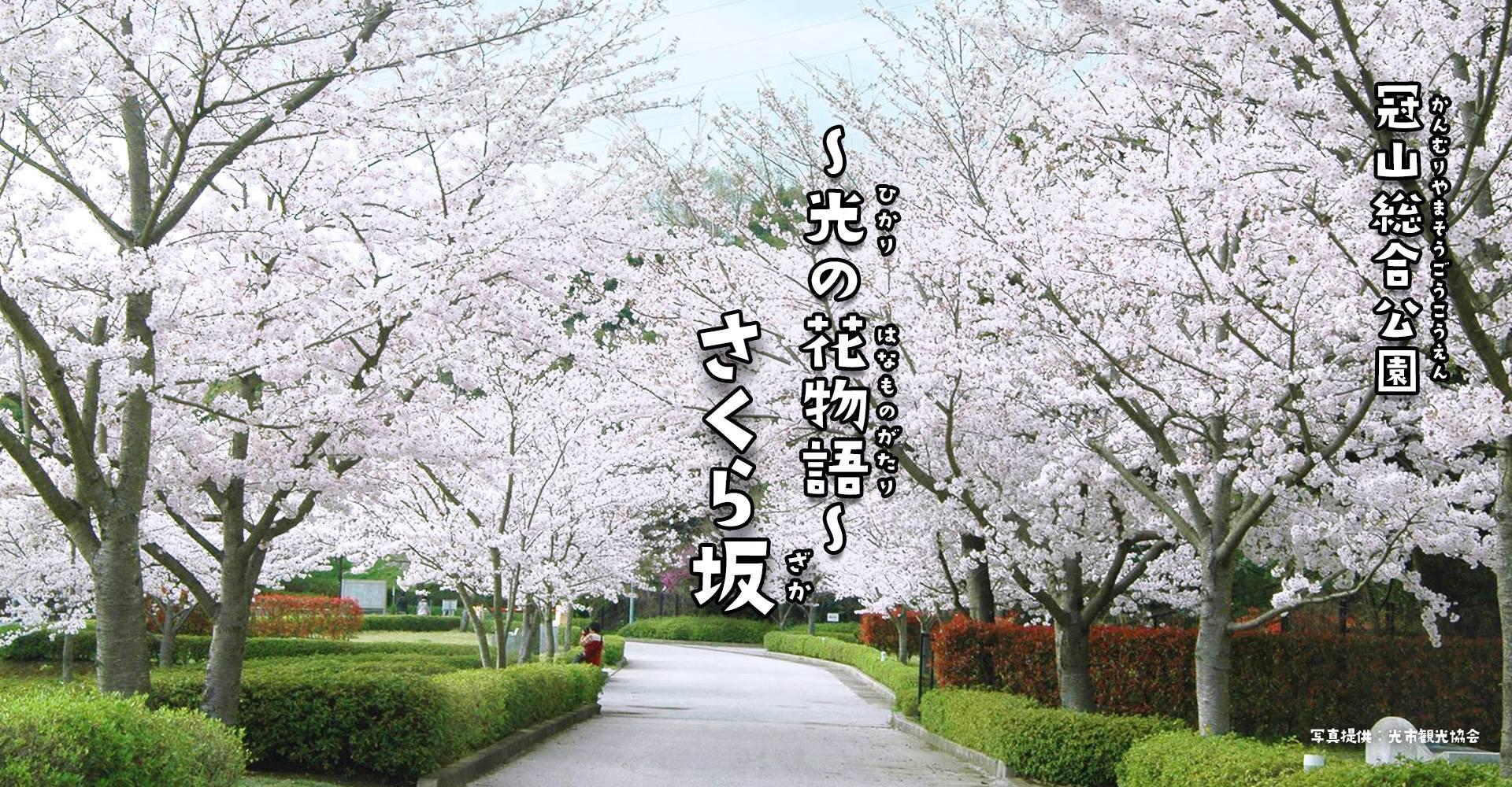 画像:~光の花物語~ さくら坂 in 2021